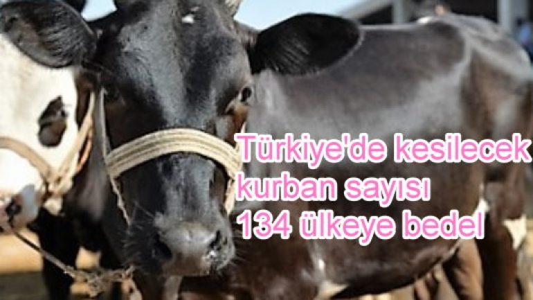 Türkiye'de kesilecek kurban sayısı 134 ülkeye bedel!